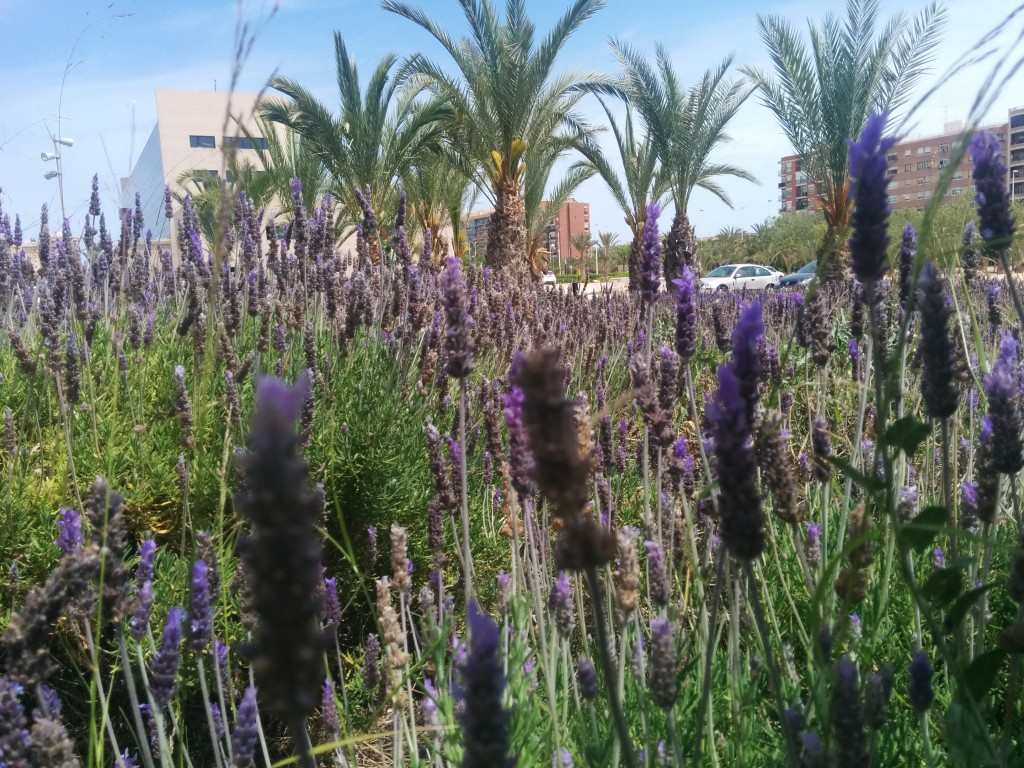 Lectures took place in the Innovation Building, Universidad Miguel Hernández (UMH), surrounded by lavender and palm trees.